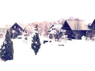 冬限定 TAPAバンガロー宿泊素泊まりベッドタイプ イメ-ジ