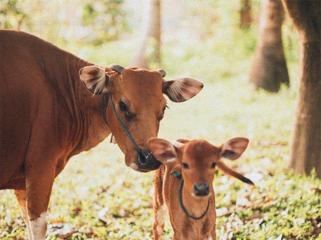 酪農体験 イメージ